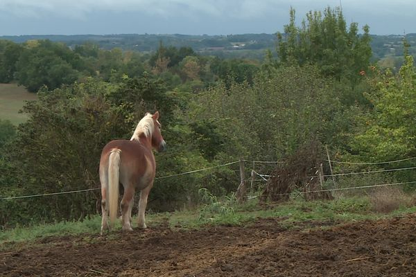 Dans le Tarn-et-Garonne, un collectif de bénévoles s'est créé pour surveiller les chevaux et prévenir d'éventuelles mutilations.