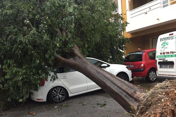 Perpignan - Un arbre arraché devant un immeuble d'un quartier résidentiel - 23.10.19