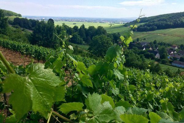 Un domaine viticole en Côte-d'Or