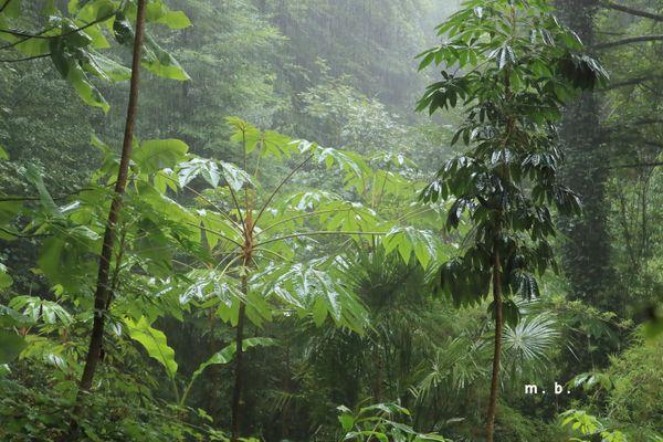 Forêt de Eu