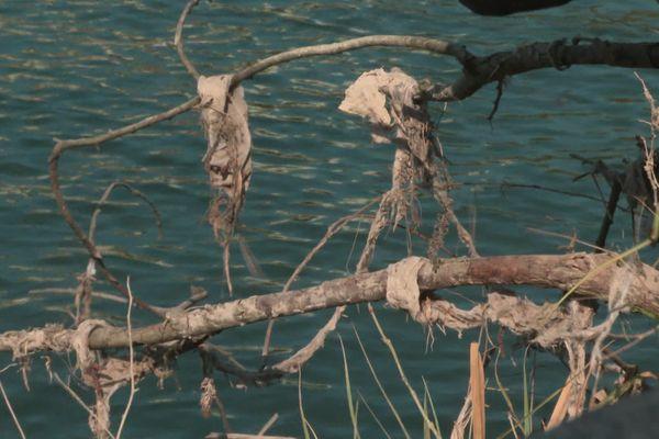Les bénévoles ont mis la main sur de nombreuses lingettes emmêlées dans les arbres.