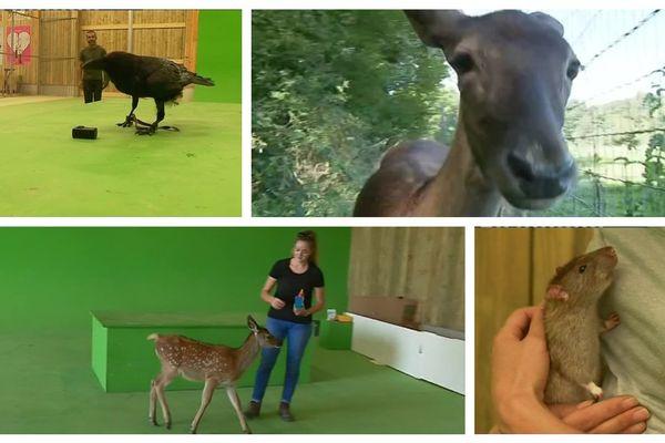 A Sury-aux-Bois, Animal Contact tourne avec des animaux pour le cinéma