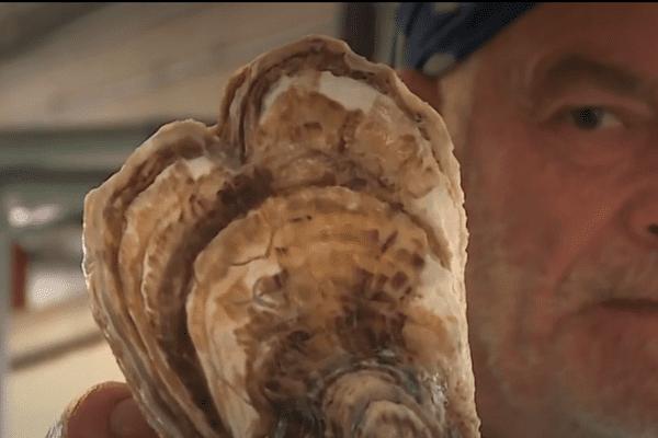 L'une des huîtres produites par Christophe Guinot à Leucate, façonnée en forme de coeur.