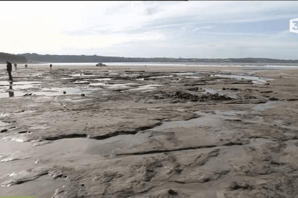 Forêt fossilisée sous la plage de Locmaria-Plouzané (29)