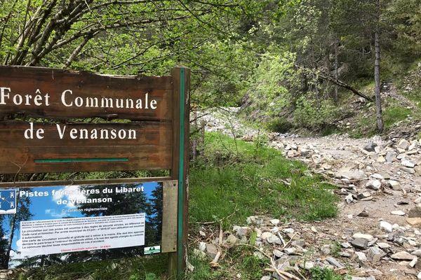 Un sentier botanique crée dans la forêt communale de Venanson
