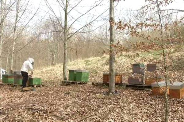 les abeilles sortent de leur hivernage