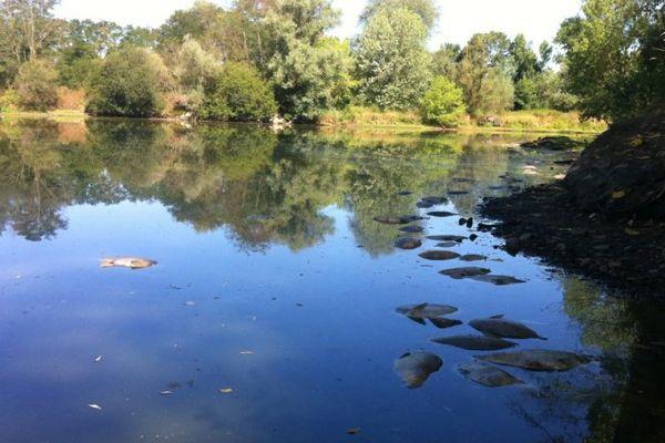 A Thiers (63) les brèmes de l'étang Iloa n'ont pas résisté à la sécheresse.