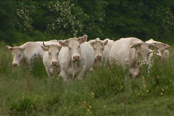 Les éleveurs souhaitent des dernières heures de vie plus digne pour leurs bêtes.