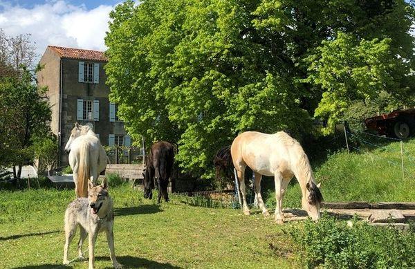 Ounka devant la propriété des Cannaud, également un centre de formation de naturopathie