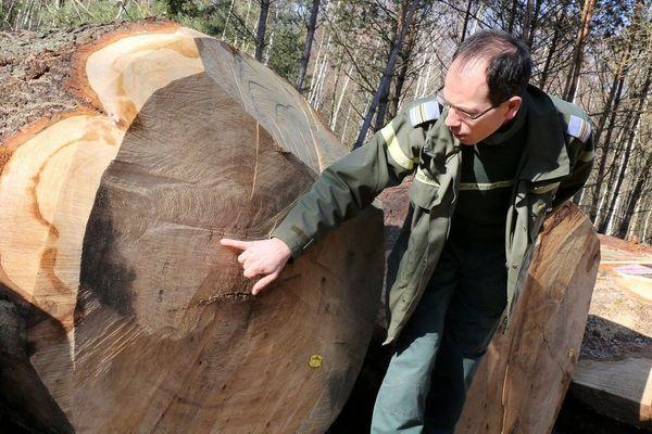 Rencontre avec un technicien forestier. Portrait métier diffusé dans le cadre de l'émission Ensemble c'est mieux (F3/Edend prod)