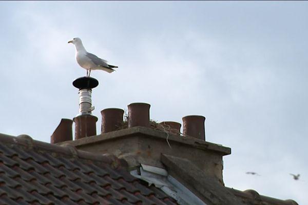 Un goéland sur un toit