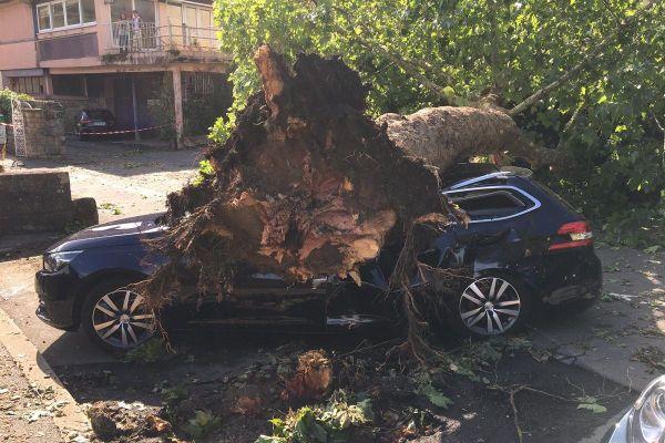 Des chutes d'arbre ont détruit plusieurs véhicules stationnés avenue Victor-Hugo, dans le centre ville de Figeac.