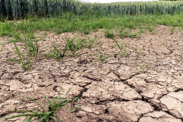 En 2019, l'Hérault, le Gard ou encore l'Aude avaient été durement touchés par la sécheresse