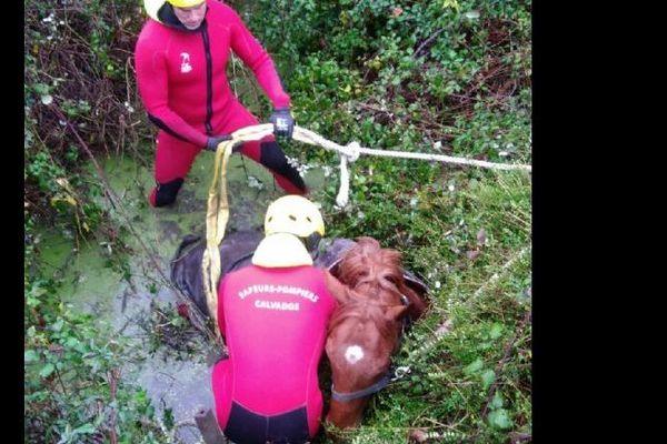 L'équipe SAV du centre de secours de PERIERS EN AUGE est intervenue afin de libérer et dégager le cheval pris au piège au moyen de sangles et du tracteur de la propriétaire.