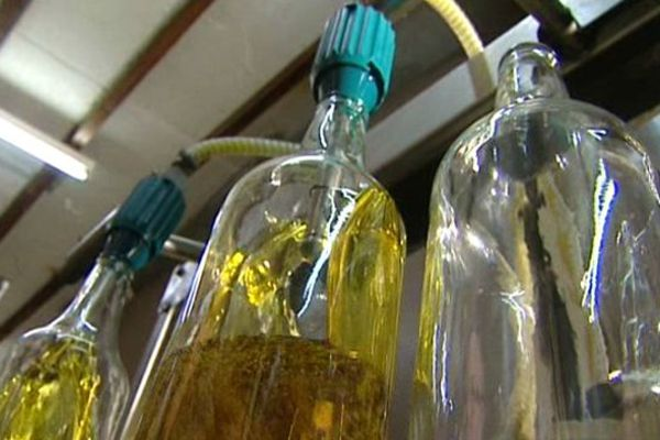 L'huile d'appellation d'origine protégée a obtenu la consécration à Paris.