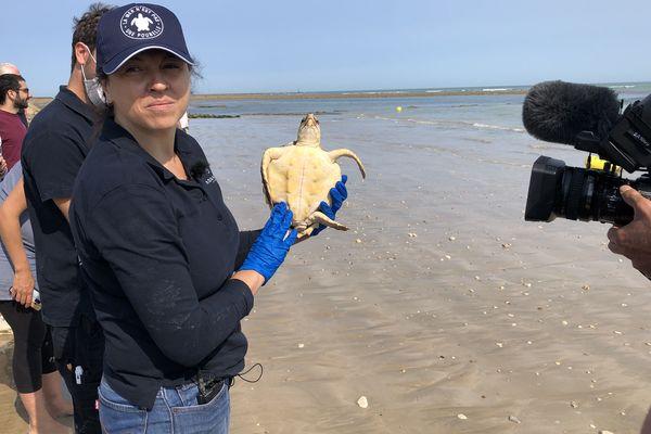 Les tortues de mer ont passé plusieurs mois entre les mains des équipes du centre de soins de l'aquarium de La Rochelle.