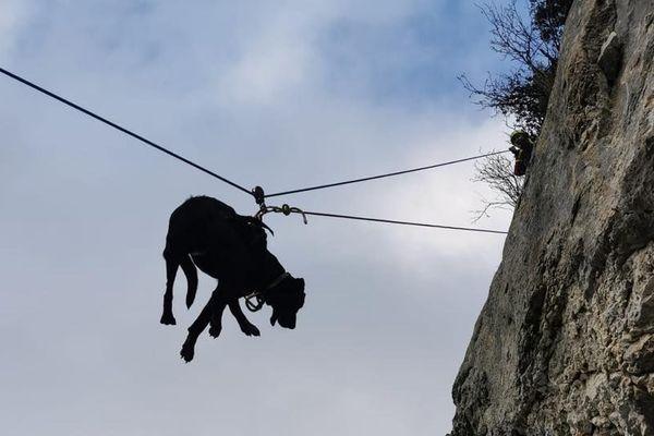 Les chiens ont été repérés sur une paroi rocheuse inaccessible.