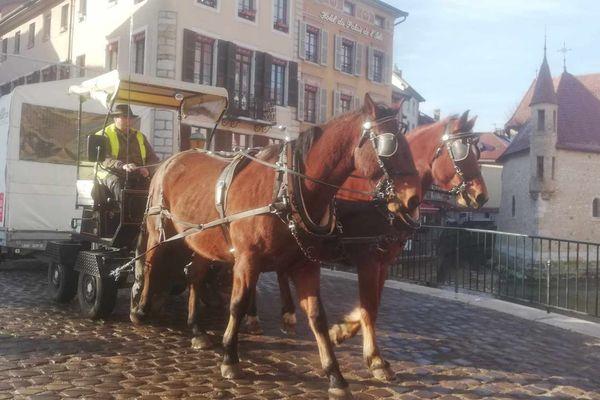 Collecte des sapins de Noël à cheval dans le vieil Annecy