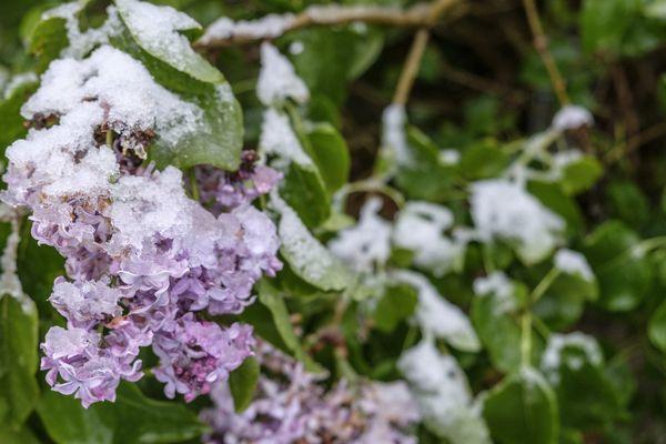 Pour ce premier saint de glace de l'année, les températures sont en nette baisse. Bon! N'exagérons pas; il ne va tout de même pas neiger en Bretagne.