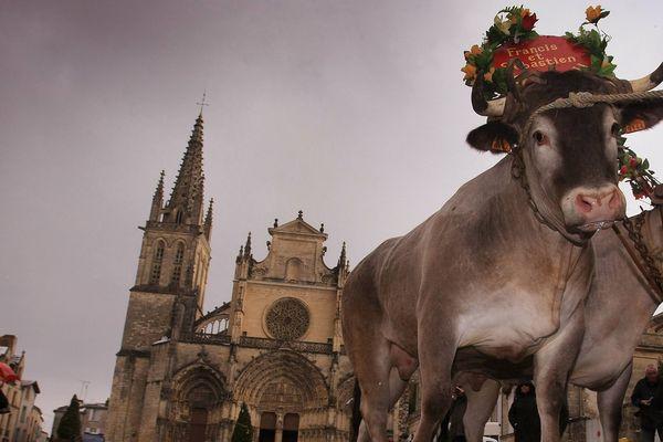 La promenade des bœufs gras de Bazas, plus de 700 ans de tradition