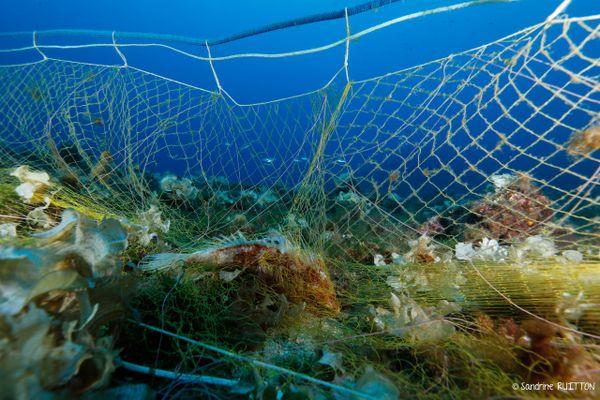 Les filets perdus en mer nuisent à la biodiversité locale, amassant de la vase sur les fonds marins et emprisonnant les espèces marines