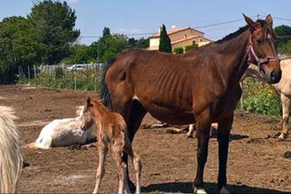 Après la découverte de 27 chevaux et poulains maltraités, la Fondation 30 Millions d'Amis a déposé plainte.