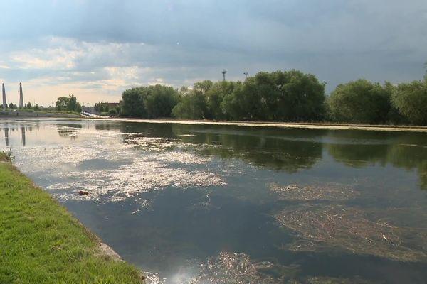 Le canal de Saint-Quentin dans l'Aisne est envahi par une algue verte qui prolifère lorsqu'il fait chaud