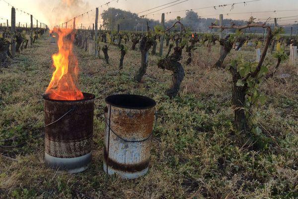 Feu pour réchauffer les vignes à Noyers-sur-Cher en appellation Touraine
