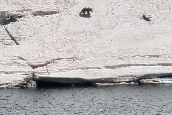 Une randonneuse rencontre un ours dans les Pyrénées ariègeoises. Elle le photographie, le filme et profite du spectacle.