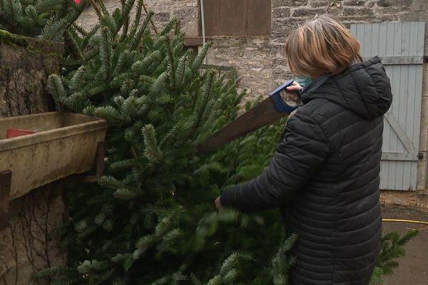 Les sapins de Noël apportés par les internautes, sont découpés en branches pour être donnés aux chèvres qui adorent en faire leur repas.