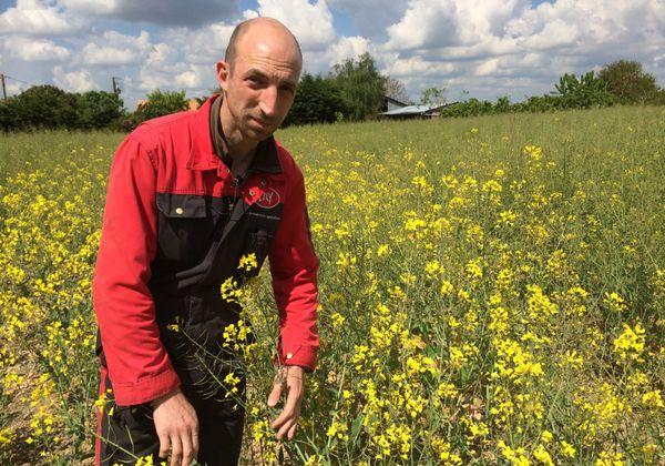 Gaël Drouet utilise le drone depuis 3 ans pour analyser sa production de colza