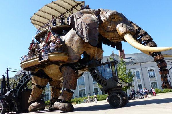 L'éléphant est de sortie