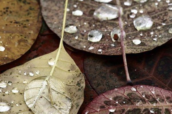 Un temps d'automne...