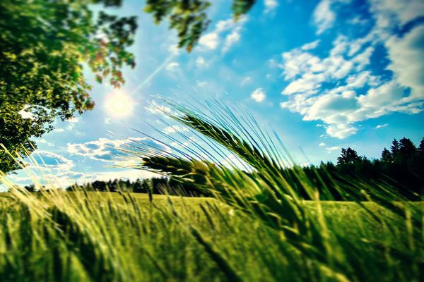 Belles couleurs d'été en Haute-Vienne