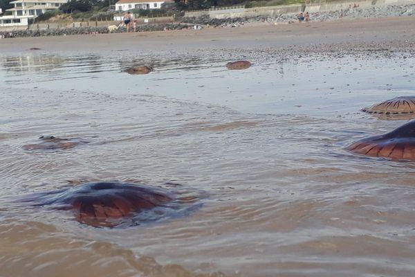 Les méduses en nombre sur la plage Brétignolles-sur-Mer, en Vendée, le 23 juin 2019