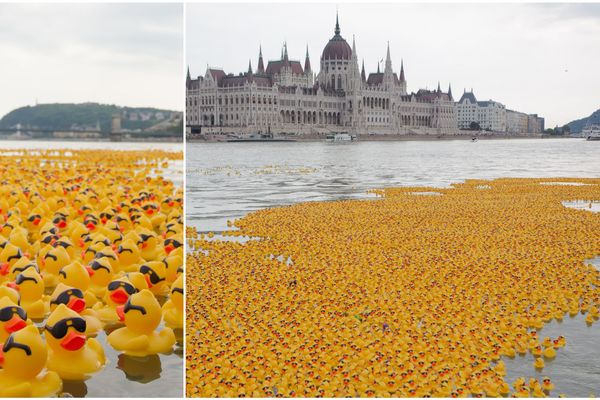 Les courses de canards, ou duck races, ont conquis le monde. Comme ici à Budapest, la capitale de la Hongrie, en 2014. (image d'illustration)