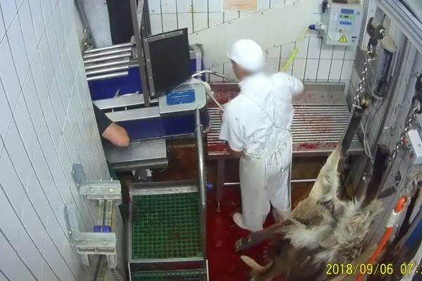 Des infractions engendrent une détresse et des souffrances sévères aux animaux, qui s'ajoutent à celles inhérentes à leur mise à mort.