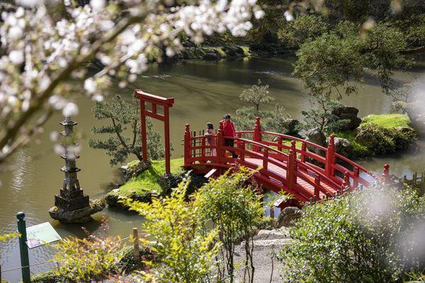 Hanami est la fête des fleurs au Japon.