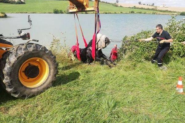 Les pompiers du Gers au secours d'une jument tombée dans un lac - 29 juin 2021.