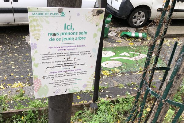 Paris 20ème - il est possible de jardiner au pied des arbres depuis l'été 2015