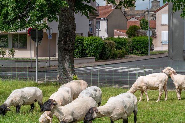 Vitry-Le-François, adapter les propositions aux envies de nature
