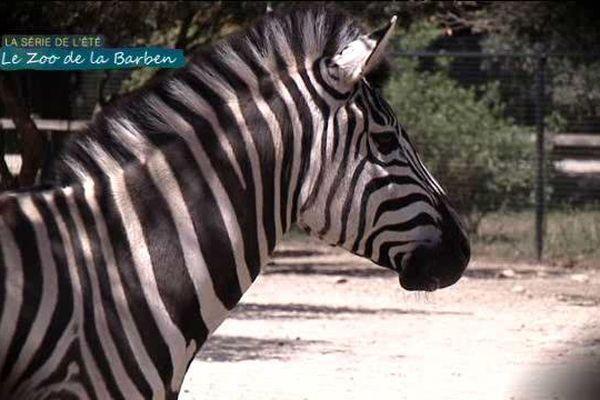 Notre feuilleton de l'été vous fait découvrir la vie des pensionnaires et du personnel du Zoo de la Barben.