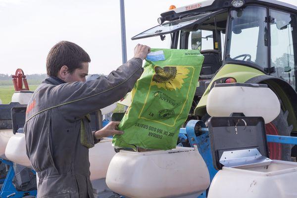 Semis d'une culture de tournesol en agriculture biologique
