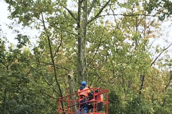 L'abattage des arbres a débuté le 28 septembre sur les Basses-Promenades à Reims