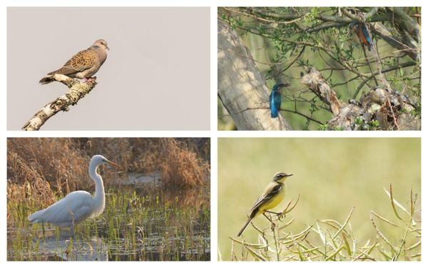 L'avifaune est au cœur des préoccupations de la LPO, mais c'est toute la biodiversité que l'association s'efforce de préserver