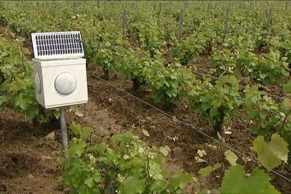 Dans les vignes de Vouvray (Indre-et-Loire), de la musique est diffusée au cœur des vignes pour lutter contre l'esca.