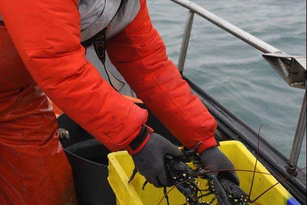 Julien Robin à la pêche au homard en baie de Paimpol (22)