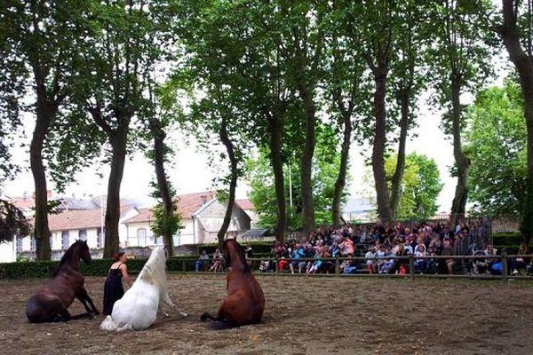 Spectacle équestre au haras de Tarbes, dimanche 12 juillet