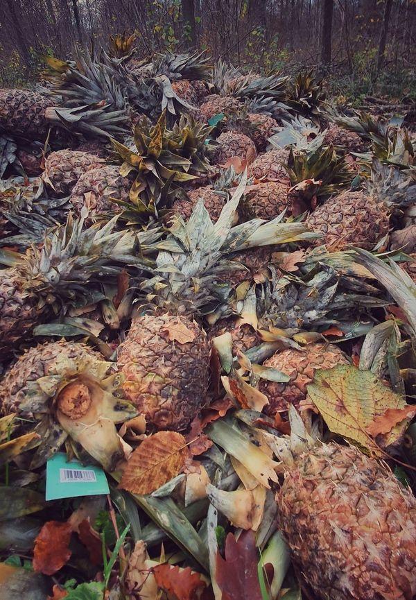 Toutes les étiquettes sur les ananas abandonnés sont identiques.