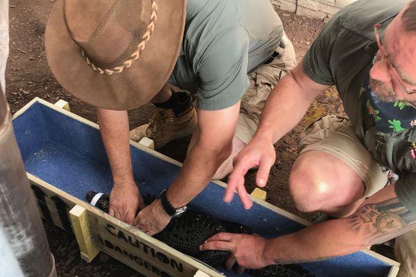 La douzaine de crocodiles sera transportée dans des caisses individuelles jusqu'au Maroc.